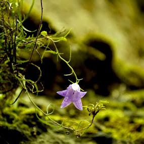 by Lili Screciu - Nature Up Close Flowers - 2011-2013