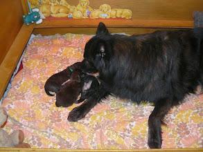 Photo: oma Jasmijn met de pups
