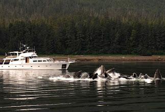 Photo: Watching Bubble Net Feeding Humpback Whales