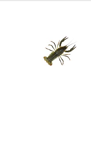 玩免費模擬APP|下載小龙虾 app不用錢|硬是要APP