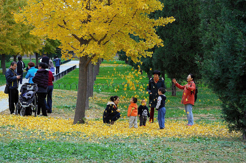 Locals gather during a fall day in a Beijing park.