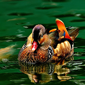 by Muzany Consequat - Animals Birds ( pwcbabyanimals )