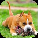 AmStaffs Dog Simulator icon