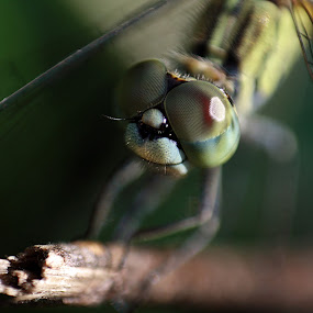 by Yunita Halim - Animals Insects & Spiders