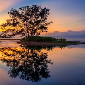 Solo Tree by Bayu Adnyana - Landscapes Waterscapes ( tree, waterscape, sunset, sunrise, landscapes, morning )