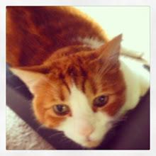 Photo: Mr.Tom Ready for a nap #intercer #cat #cats #catlovers #pet #pets #petsofinstagram #catsofinstagram #eyes #fur #funny #orange #white #rest #nap - via Instagram, http://ift.tt/Stu47b