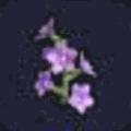 ふじの花・中