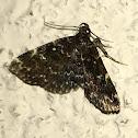 Smoky Idia Moth