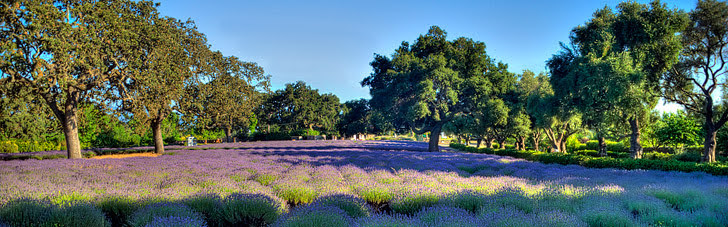 Los Olivos (15 Most Popular Los Angeles Day Trips).