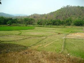 Photo: Rice padies