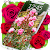 Roses Live Wallpaper file APK for Gaming PC/PS3/PS4 Smart TV