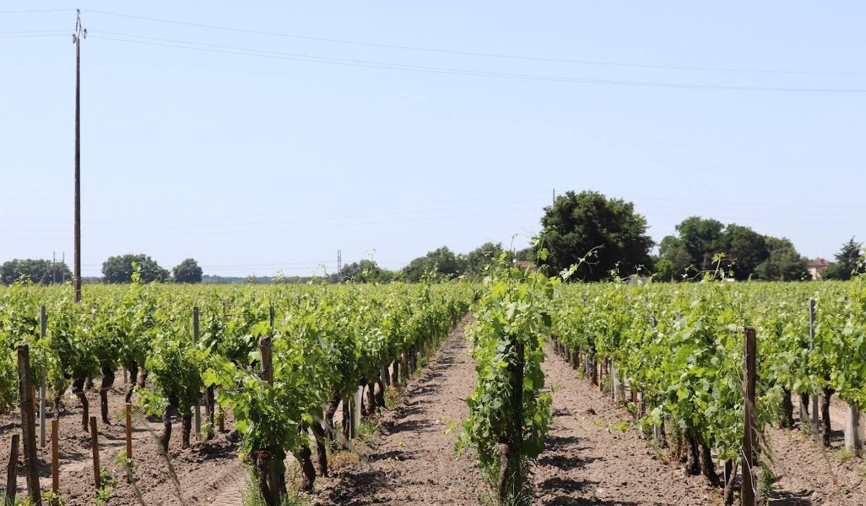 Vignoble Lalande-de-Pomerol