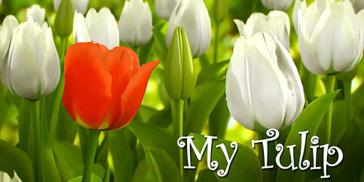 My Tulip 3D live wallpaper