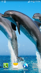 Dolphin Live Wallpapers screenshot 0