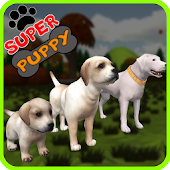 Pet dog adoption 3D game