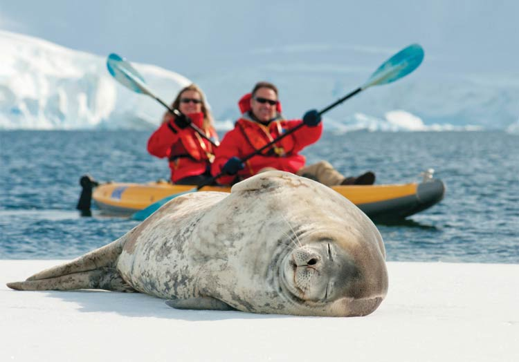 Kayak up close to sea lions, elephant seals and walruses on Lindblad Expeditions.