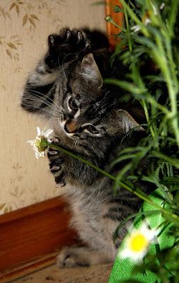 Attento fiore... ti prendo! di Maria Luisa Zoccolini