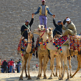 Do You Like It? by Marcel Cintalan - People Street & Candids ( pyramid, camels, men, four, egypt )
