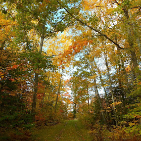 by Sandy Davis DePina - Landscapes Forests (  )