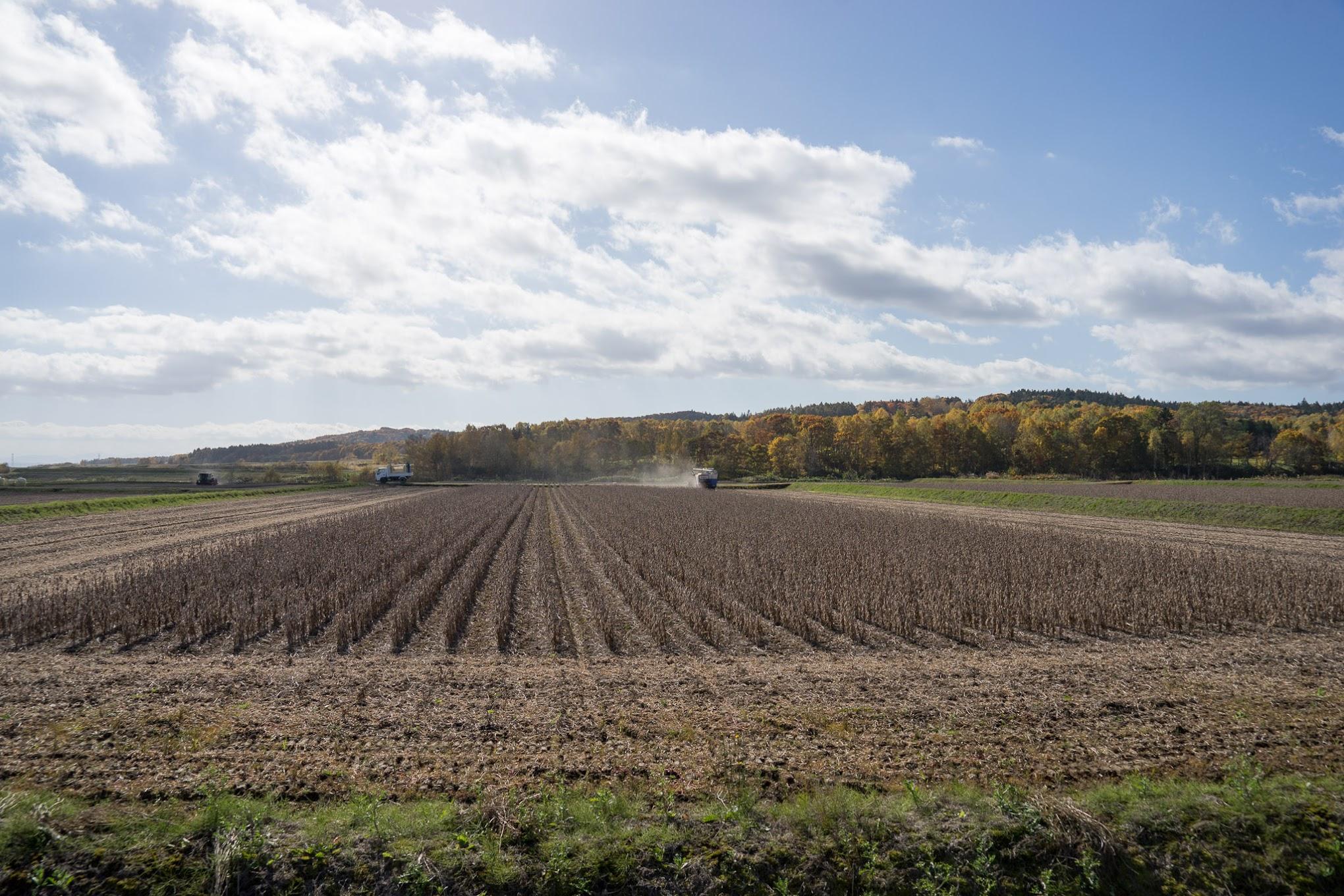 秋も深まりゆく北竜町の風景