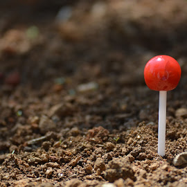 Lollipop Sprout   by Ishaq Ironight - Nature Up Close Sand ( plastic, stick, macro photography, red leaves, lollipop, sphere, gardens, nikon d, close up, nikond, red, sweet, candy, sprout, nikon, garden, soil )