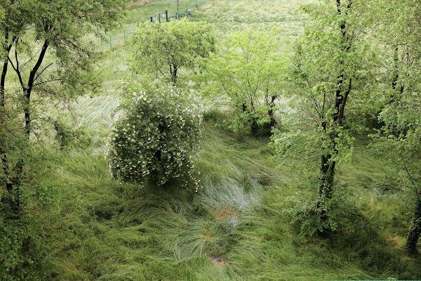 Com'era verde la mia valle di AlessandroDM