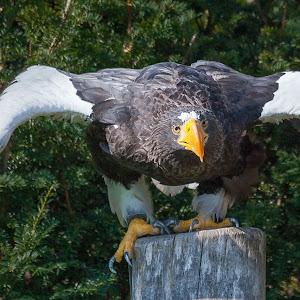 Vogel16 (1 von 1).jpg