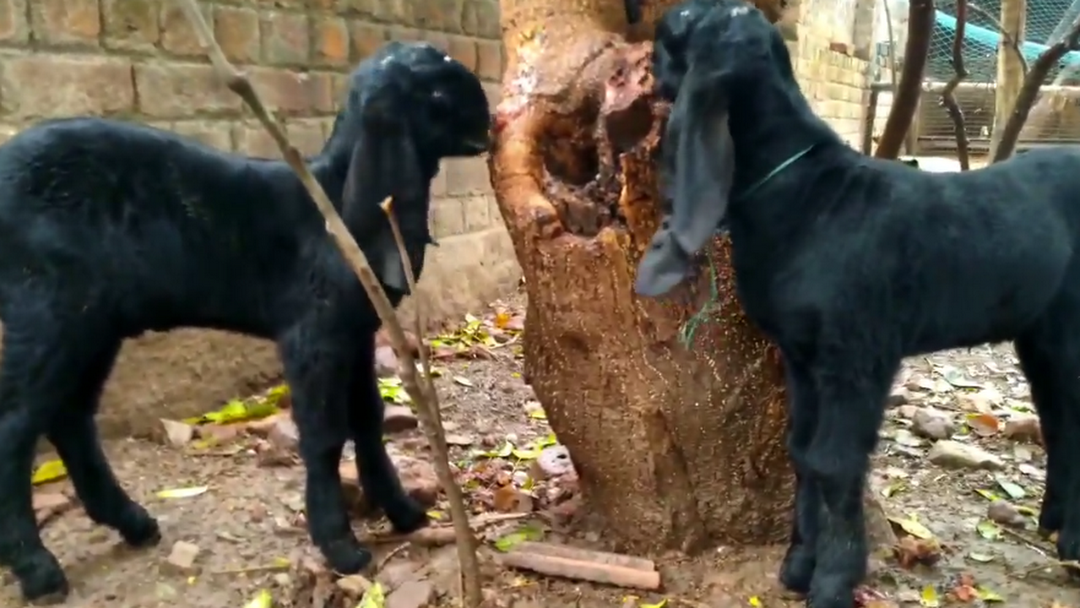 Bhoomi Goat Training Institute and Farm - Goat Training