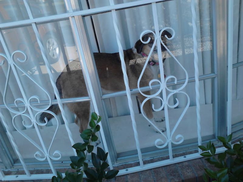 Photo: Brandy, waiting for us to come home.