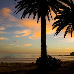 Refugio sunset by Christine Lester-Deats - Landscapes Sunsets & Sunrises ( refugio beach, california, sunset, palm trees, beach, santa barbara county )