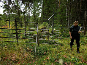Photo: One way gate for large animals - the reindeer fence that parallels the border is behind