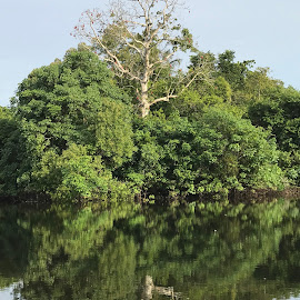 Black River Mirror by Mylene Rizzo - Nature Up Close Trees & Bushes ( amazon, forest, brazil, amazonia, river )