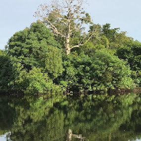 Black River Mirror by Mylene Rizzo - Nature Up Close Trees & Bushes ( amazon, forest, brazil, amazonia, river )