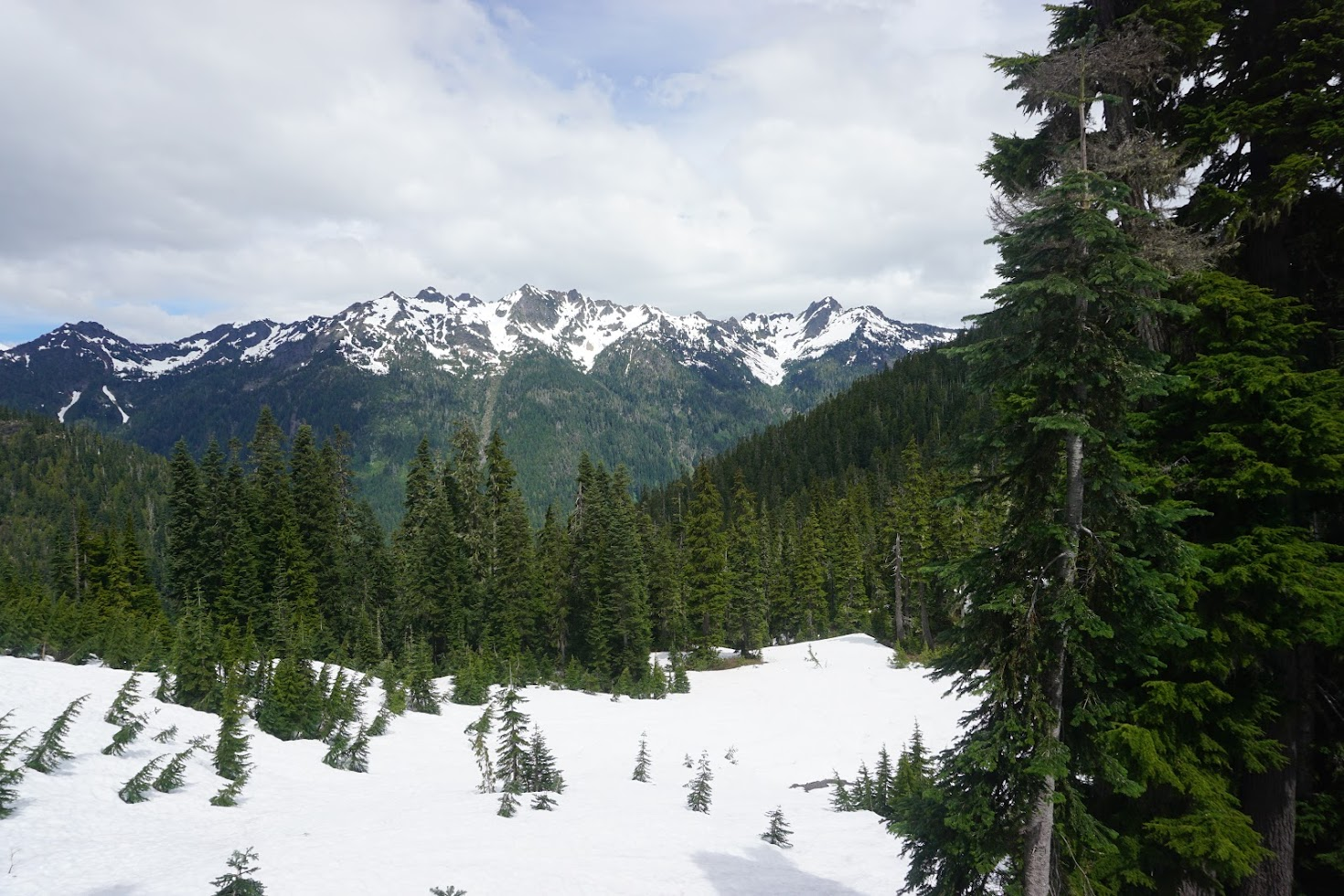 The Olympics, Olympic National Park, Washington