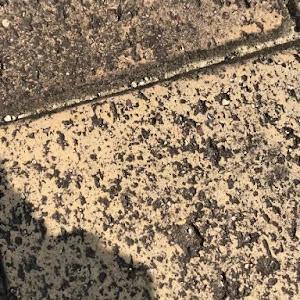 のカスタム事例画像 テツ(-⊡ω⊡)さんの2020年08月02日09:05の投稿