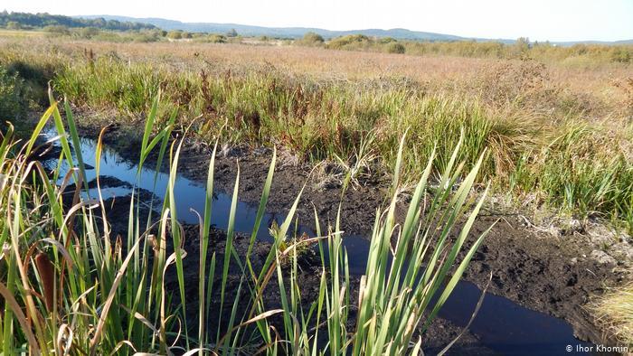 За допомогою штучно викопаних каналів науковці намагаються знову зволожити болото