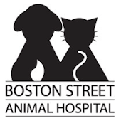 Boston Street Vet