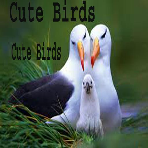 Cute Birds Apps On Google Play