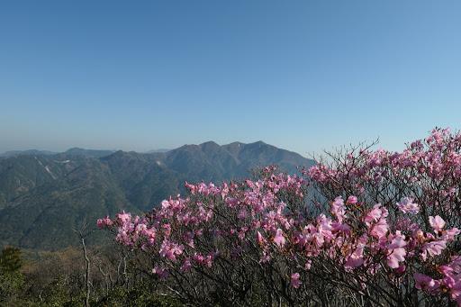 アカヤシオと釈迦ヶ岳