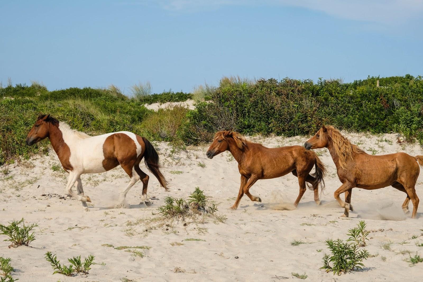 Example Scenario: Horses on the Beach