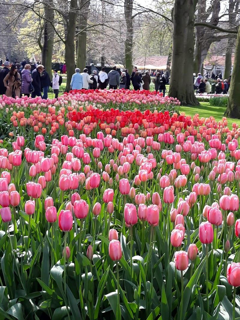 The quiet of tulipan di antonio_di_sarno