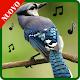 suonerie di uccelli per cellulare gratis Download for PC Windows 10/8/7