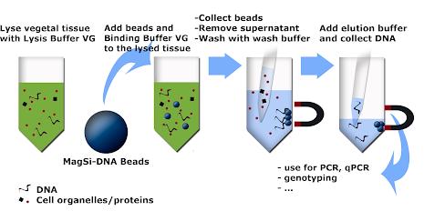 MagSi-DNA Vegetal