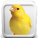 Canary Bird Sounds icon