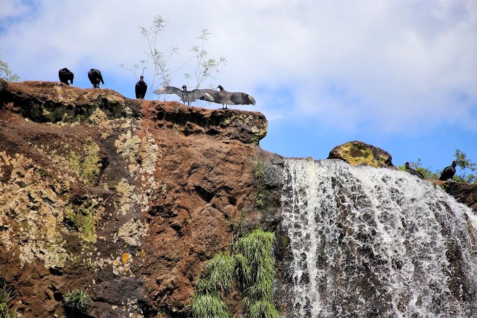 Kondory - Wodospady Iguazu