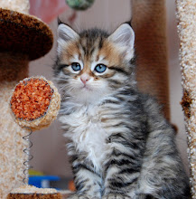 Photo: 6 weeks old