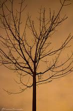 Photo: Tree Silhouette @ Rancho San Antonio County Park, Cupertino, CA - http://photo.leptians.net/#Tree_Silhouette.jpg