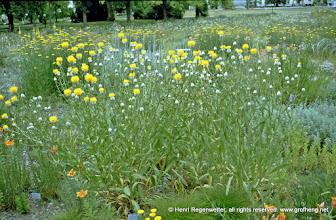 Photo: Wildblumenwiese