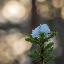 by Anngunn Dårflot - Nature Up Close Trees & Bushes