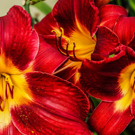 by Wendy Alley - Flowers Flower Gardens
